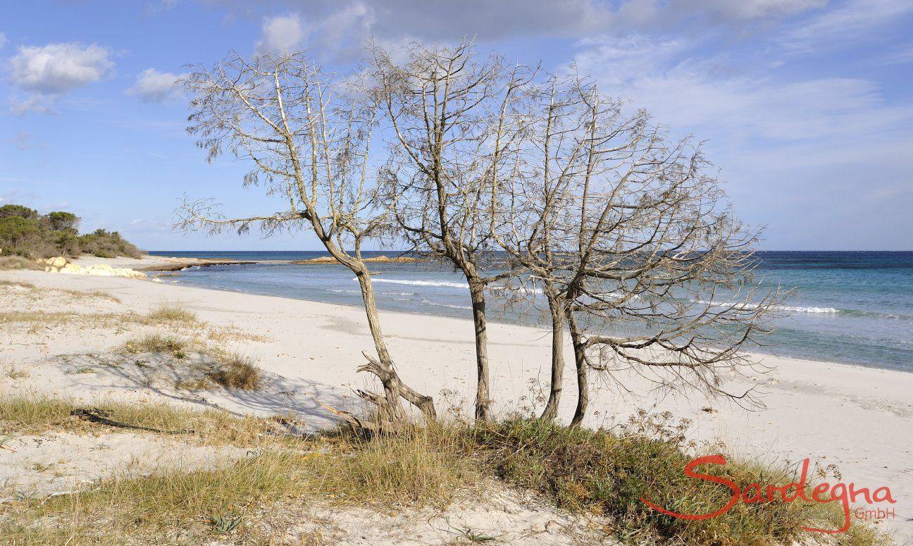 Cala Ginepro e una delle tante belle spiagge del golfo di Orosei
