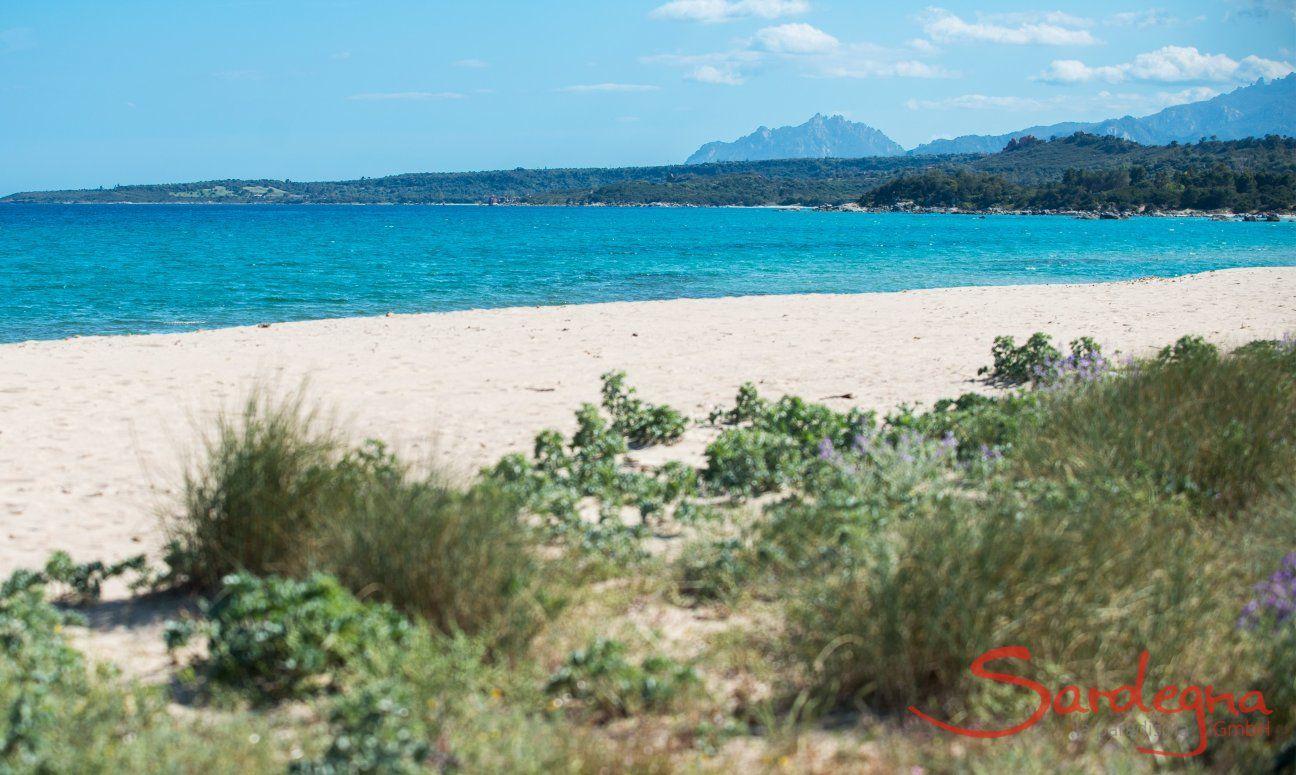 Spiaggia davanta alla tenda