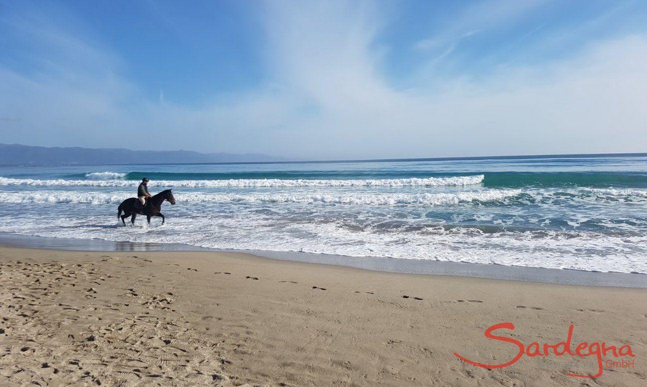Cavaliere fa una passeggiata a cavallo sulla battigia del Poetto a Cagliari