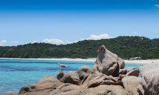 Un Gabbiamo si riposa sulle rocce di forme fantastiche davanti alla spiaggi adi Liscia Ruja