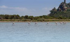 Torresalinas Flamingos