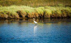 Un airone nell'oasi naturale di Porto Taverna, 18 km da Olbia