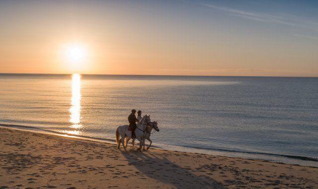 Cavalli sulla spiaggia di Rei Sole, Costa Rei all'alba
